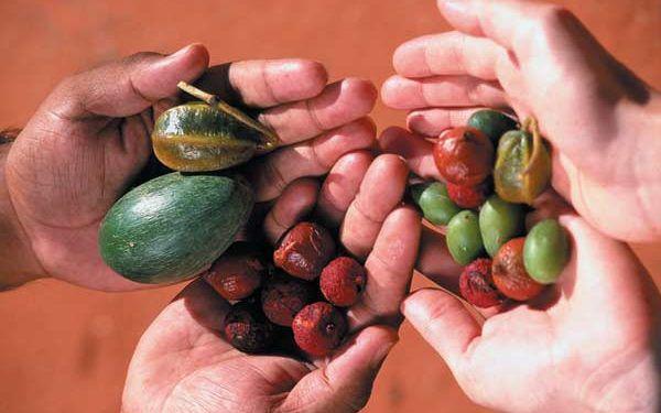 Australien: Gemüse in der Steinzeit [1]
