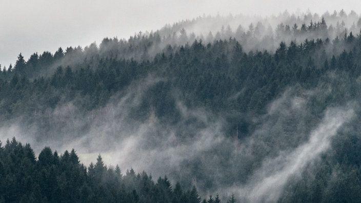 Nebelschwaden ber einem Meer von Bumen