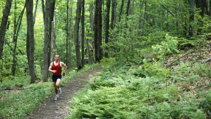 Ein Jogger luft einen Waldweg entlang